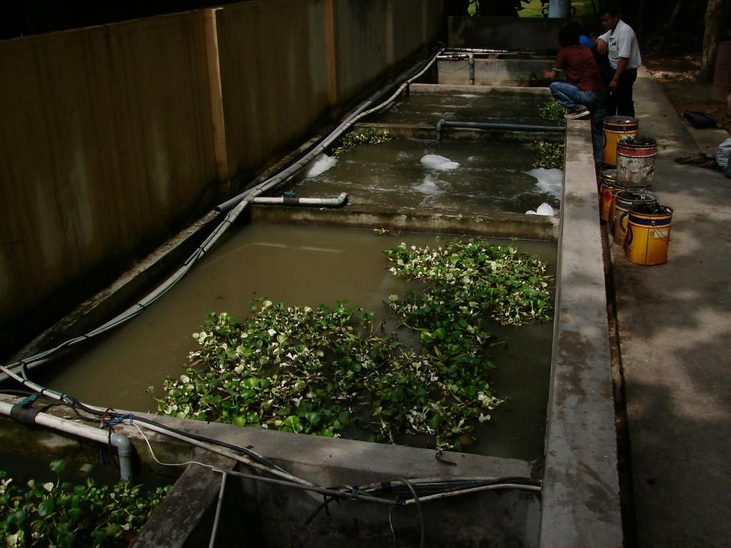 Phương pháp xử lý nước thải bằng thực vật thủy sinh