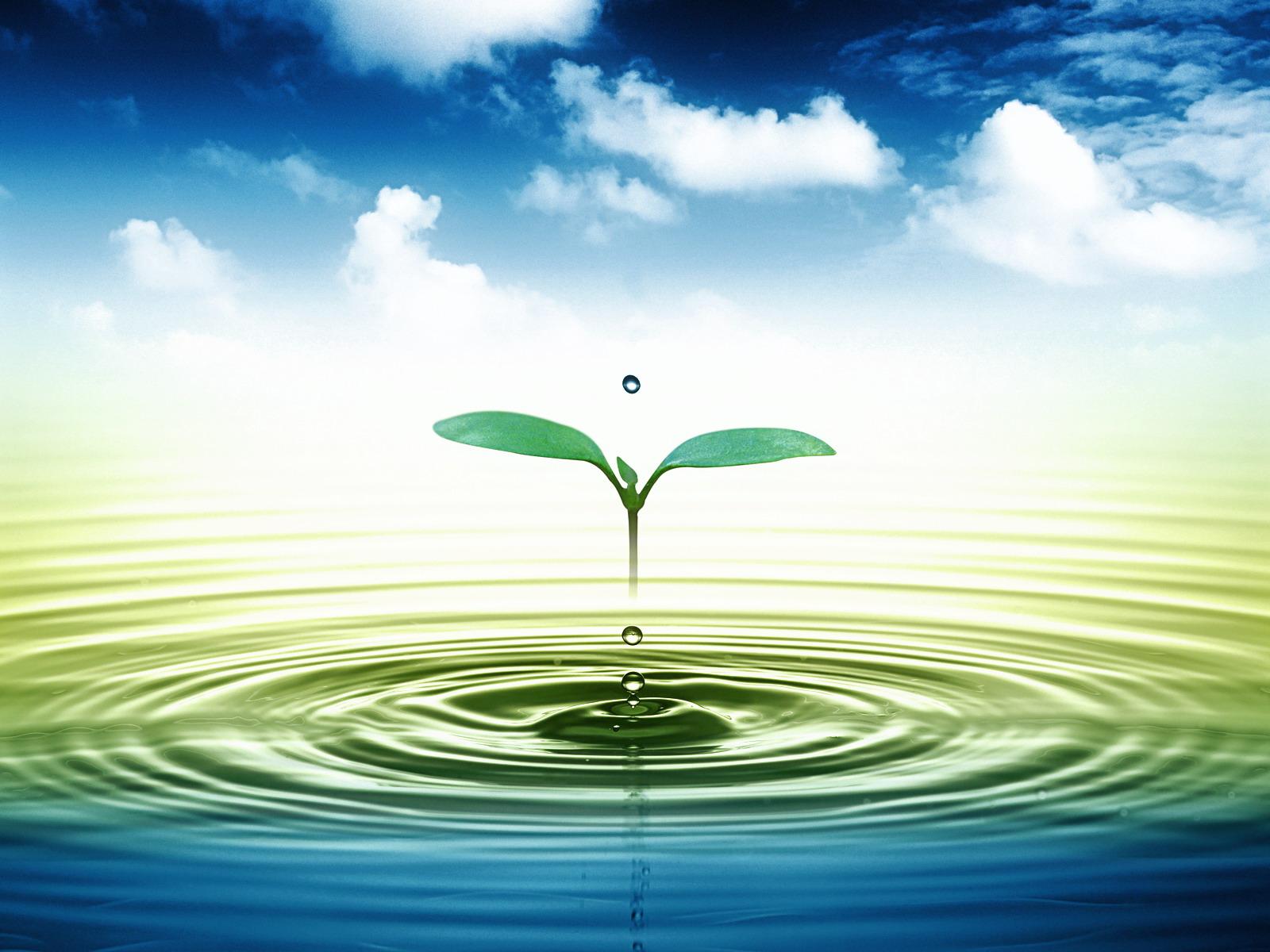 Hậu quả của ô nhiễm môi trường nước ảnh hưởng đến cuộc sống chúng ta.