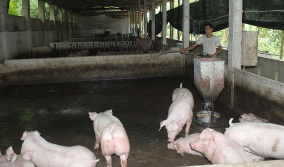 Ảnh hưởng chất thải chăn nuôi đến môi trường xung quanh