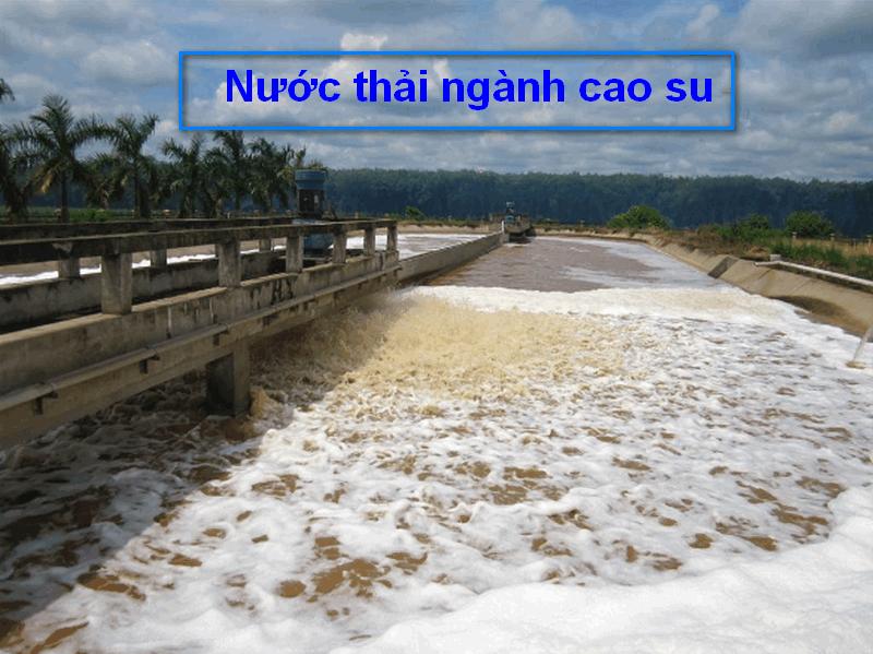 Ảnh hưởng nước thải cao su thiên nhiên