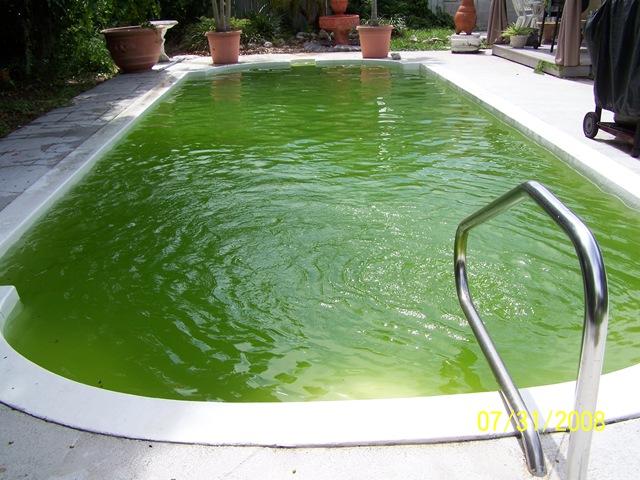 xử lý nước bể bơi