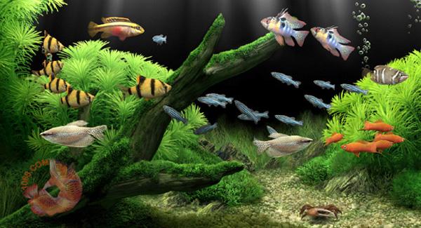 Nước bể cá