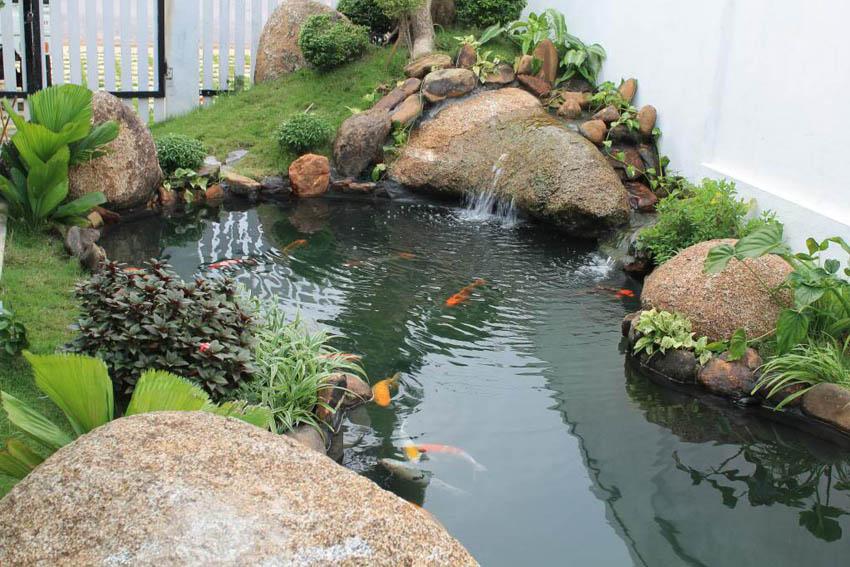 Nước hồ cá xi măng bị rêu xanh
