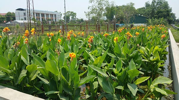 Bãi lọc trồng cây xử lý nước thải