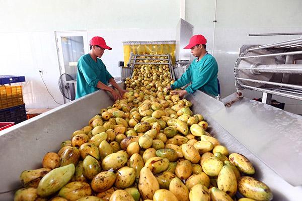 Chế biến trái cây, nông sản