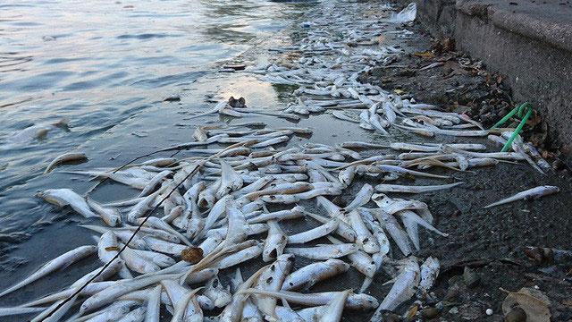 Ảnh hưởng ôi nhiễm môi trường nước đối với sinh vật