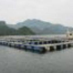 Xử lý nước nuôi thủy hải sản